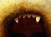 Gefährlicher Wachhund